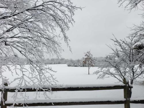 Snow around Radford (4)